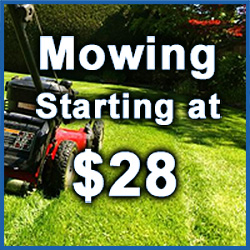 Denton lawn Mowing Service